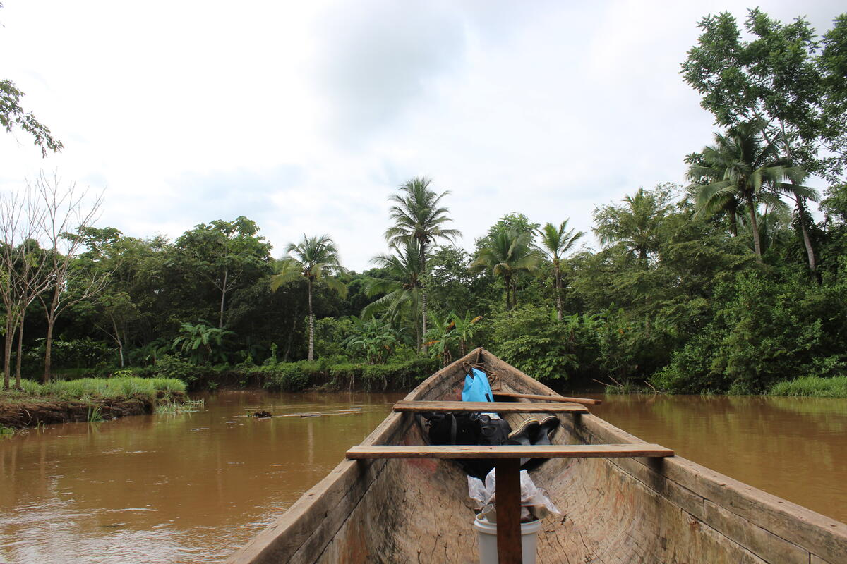 view from inside a canoe, brown river, dense green foliage