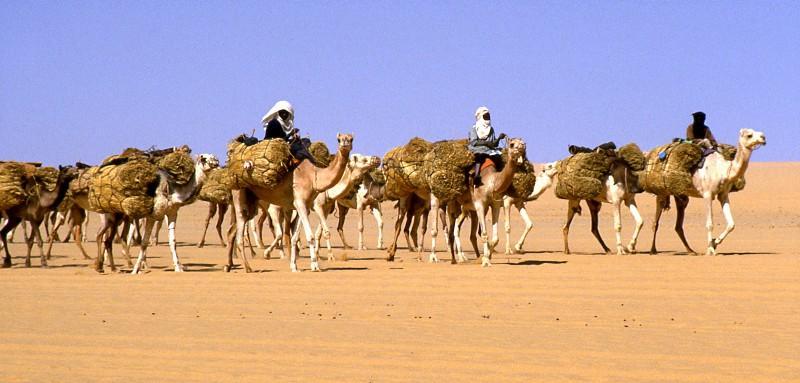 Salt caravan in Niger