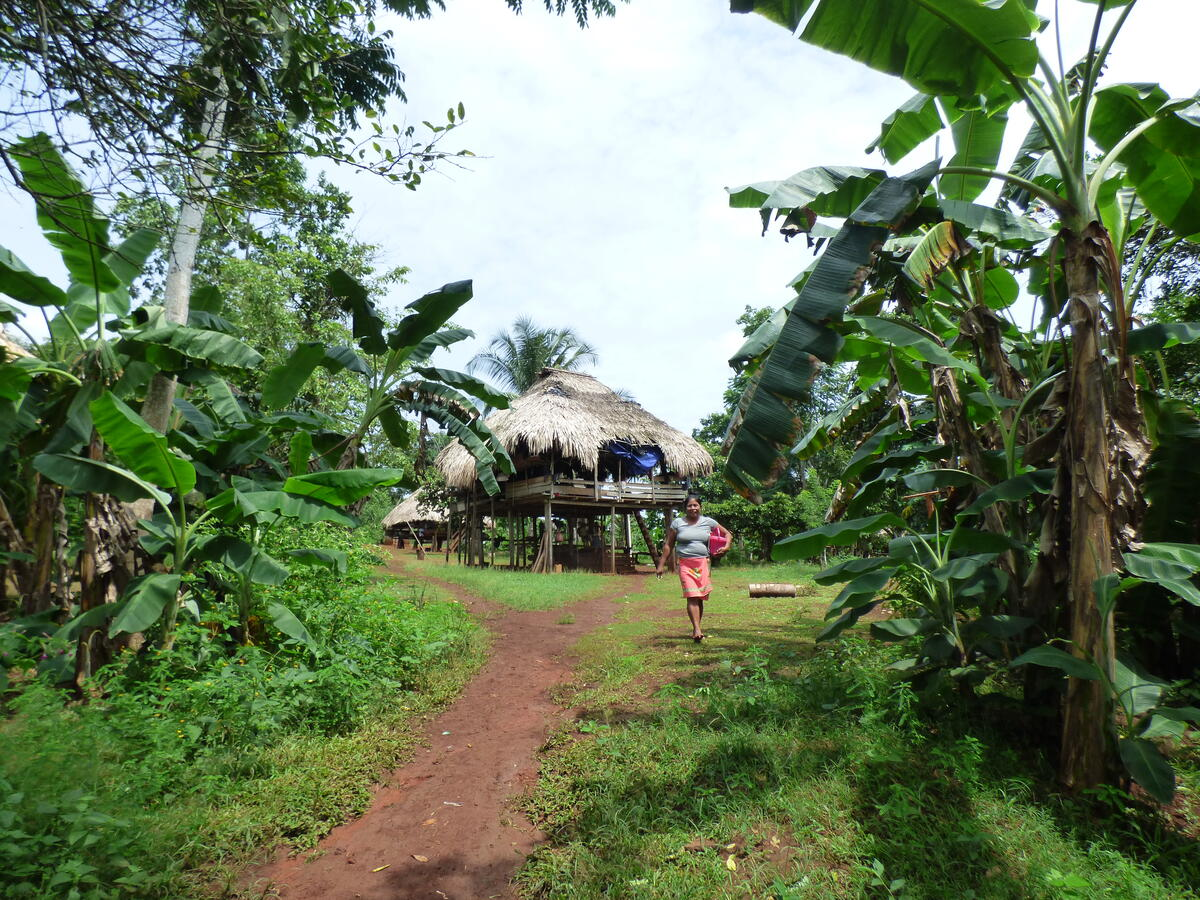 dirt path through dense vegetation, a woman, and houses on stilts in the distance